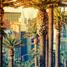 Las Vegas, Nevada, USA - Instructor Course - Share your passion for TBM with the world!  December 2019
